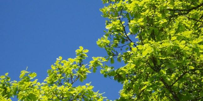 Eken, en symbol för hållbarhet och långsiktighet